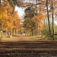 Walk the Parks Challenge 2021